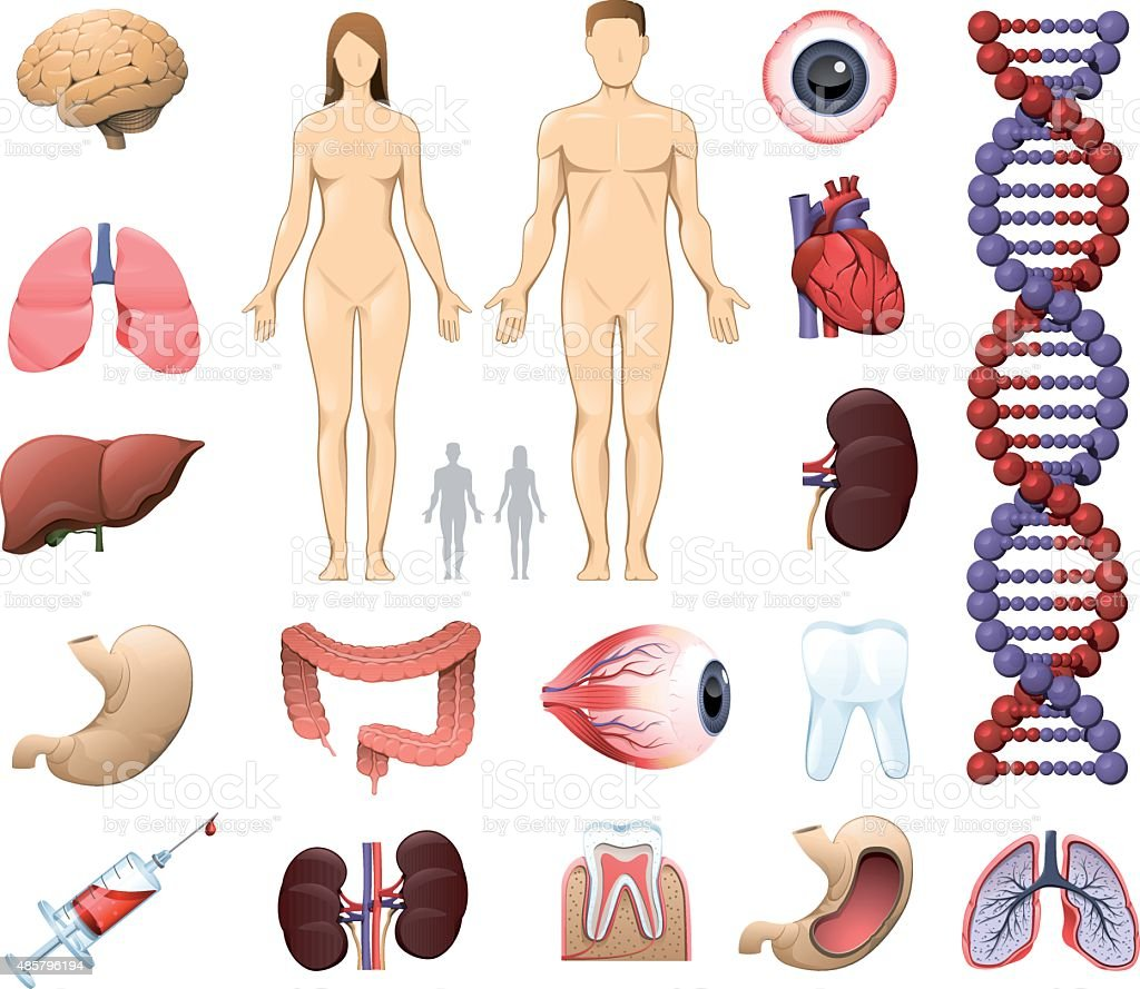 Medical and Anatomy Icons vector art illustration