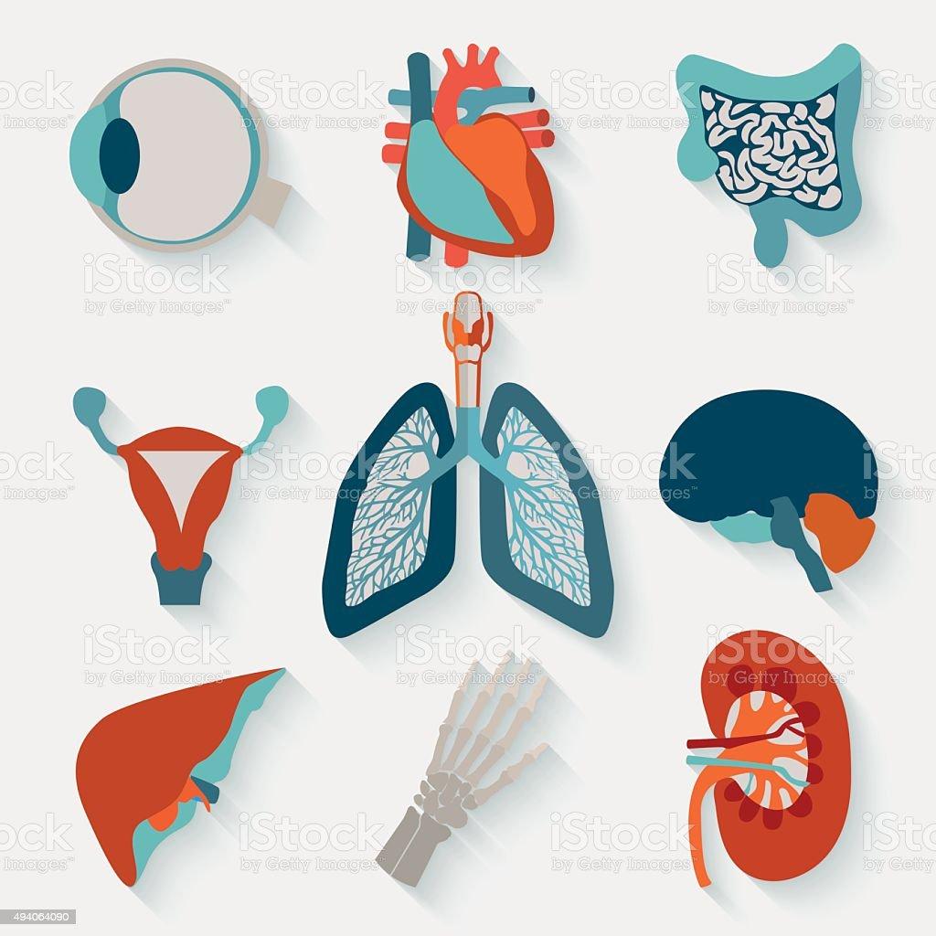 Medical icons of internal human organs vector art illustration