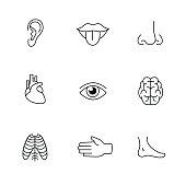 Medical icons thin line art set. Human organs