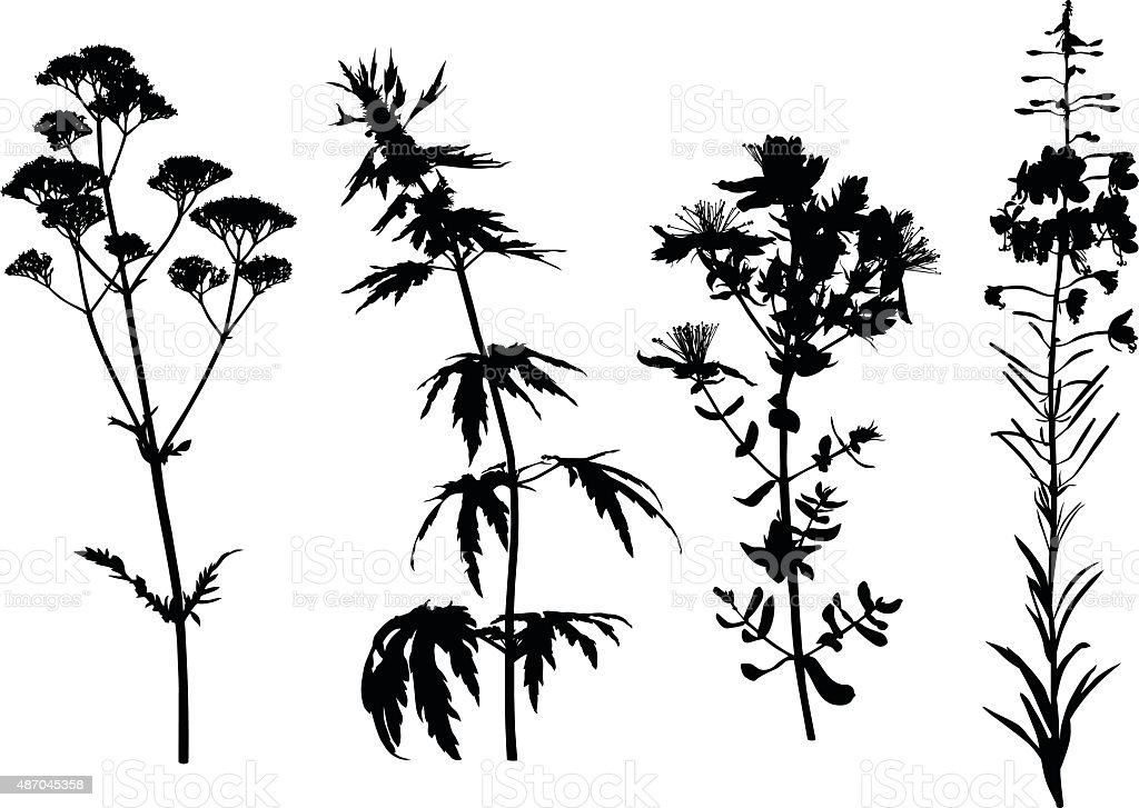 Medicinal herbals set vector art illustration
