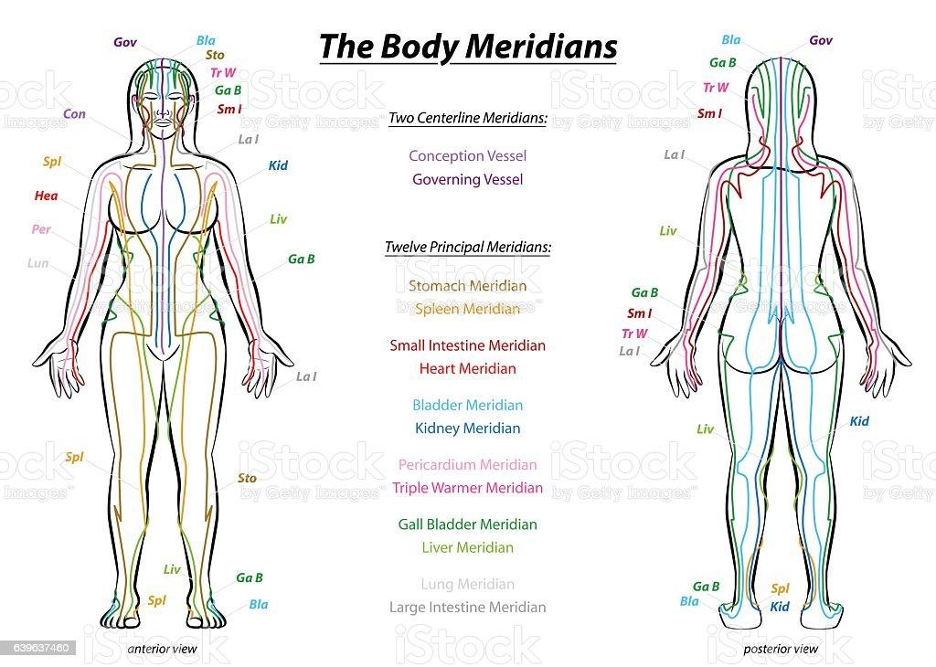 Meridian System Description Chart Female Body vector art illustration