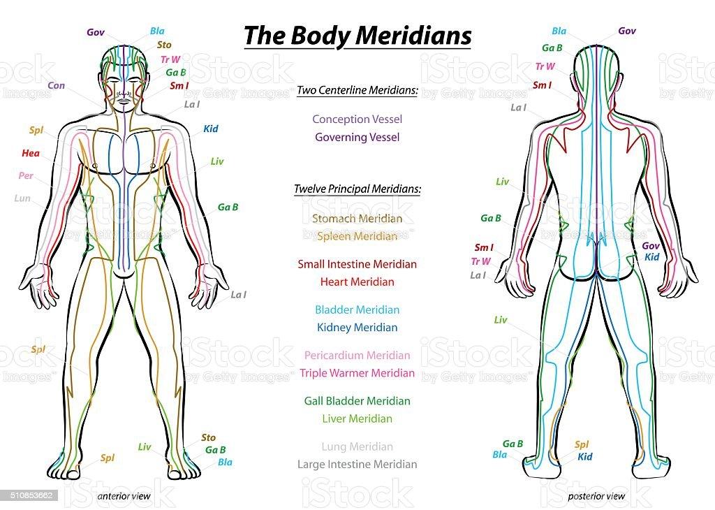 Meridian System Description Chart Male Body vector art illustration