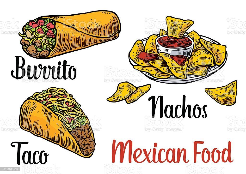 Mexican traditional food set burrito, tacos, chili, tomato, nachos. vector art illustration