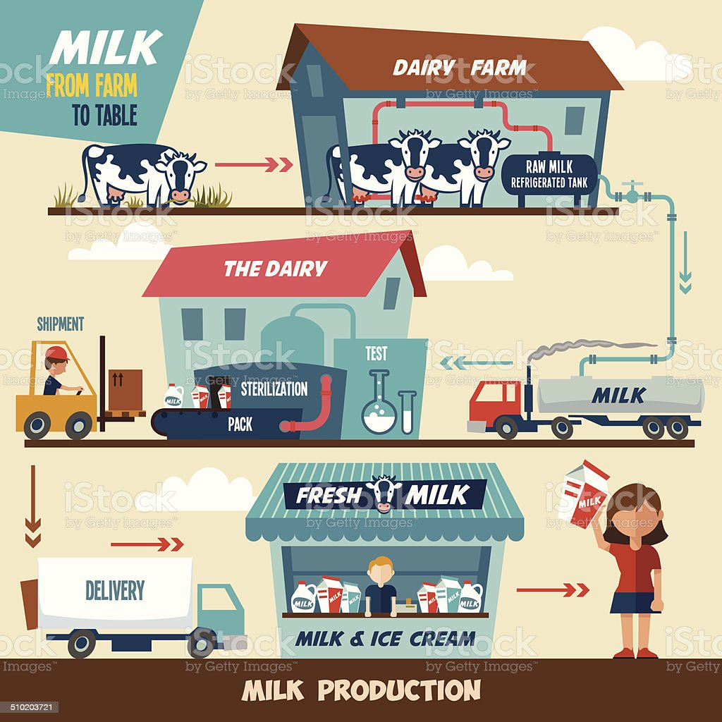 Milk production stages vector art illustration