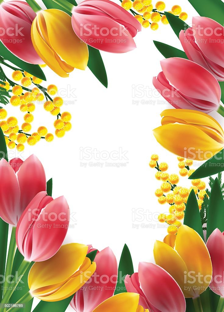 Mimosas and tulips frame design template vector art illustration