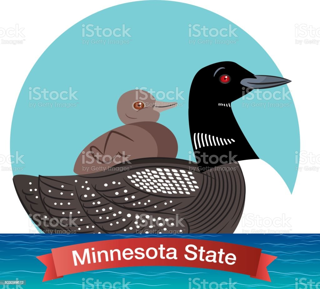 Minnesota State Bird - Common Loon vector art illustration