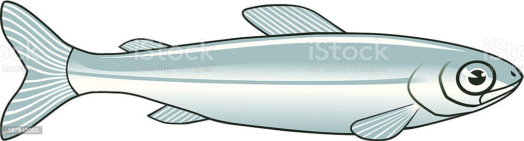Minnow vector art illustration