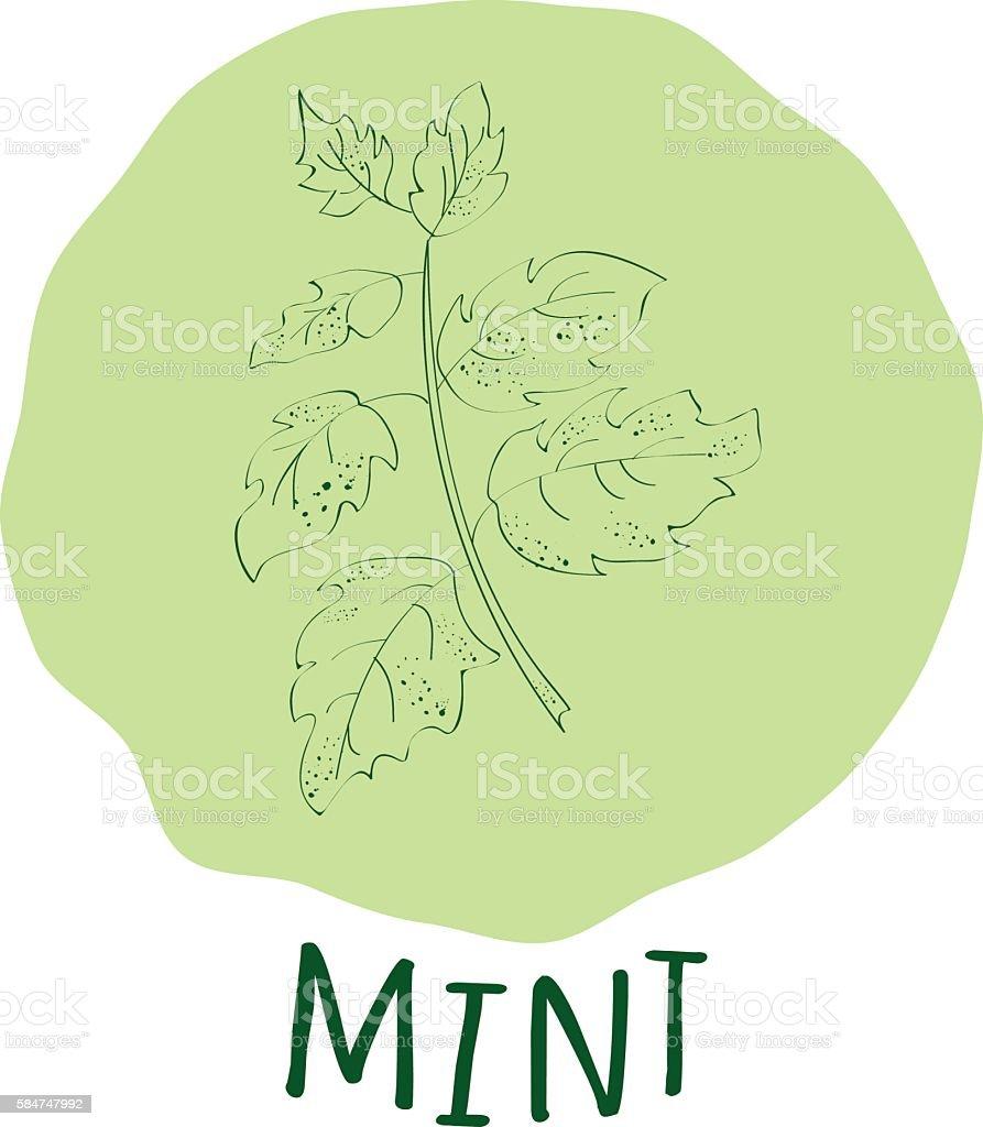 Mint branch vector illustrator stock vecteur libres de droits libre de droits