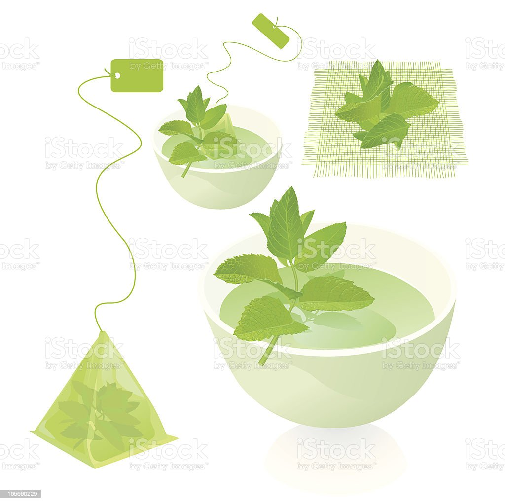 Mint Herb Leaf Tea royalty-free stock vector art