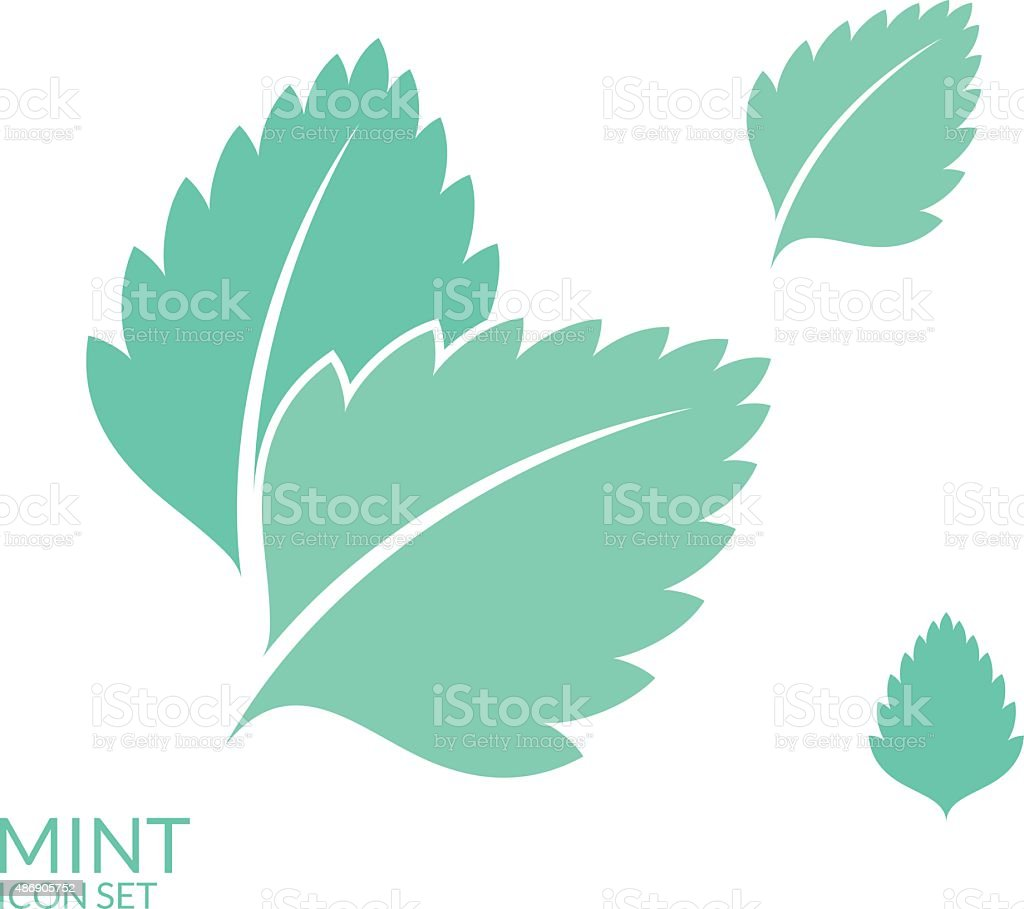 Mint. Icon set. Isolated leaves on white background vector art illustration