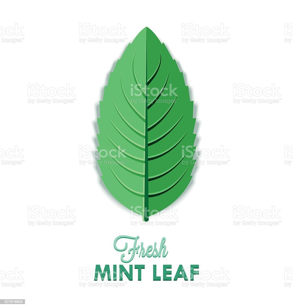 Mint leaf vector art illustration