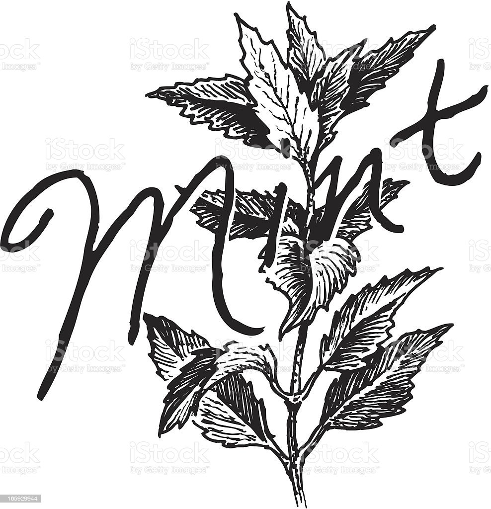 Mint Plant- Spice royalty-free stock vector art