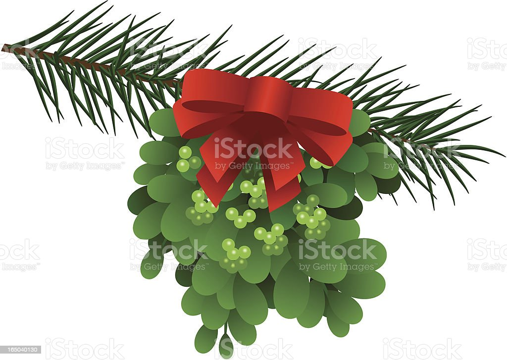 Mistletoe on Pine Branch royalty-free stock vector art