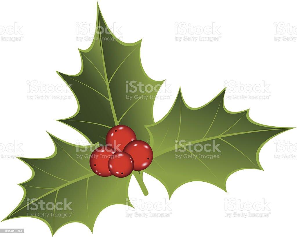 Mistletoe vector art illustration