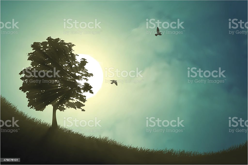 Misty morning with trees and birds. vector art illustration