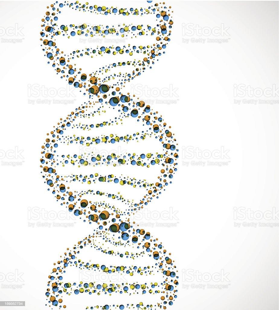 DNA molecule royalty-free stock vector art