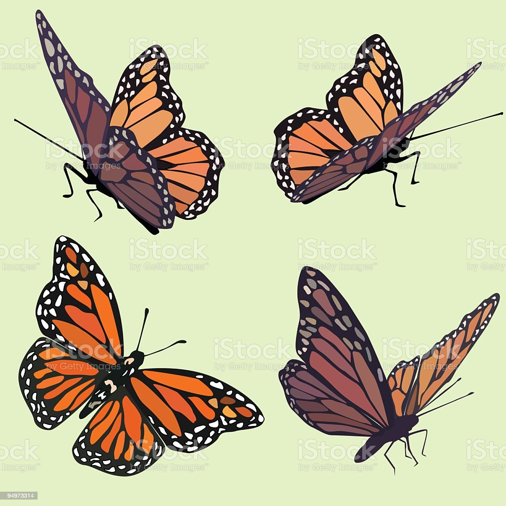 Monarch Butterflies in four different poses on pastel green background vector art illustration