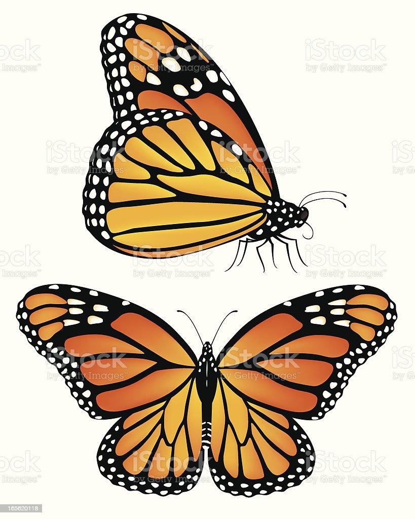 Monarch Butterflies vector art illustration