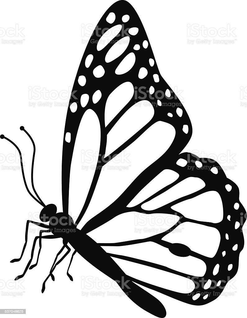 monarch butterfly side view in black and white vector art illustration