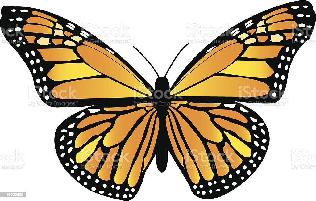 Monarch Butterfly royalty-free stock vector art