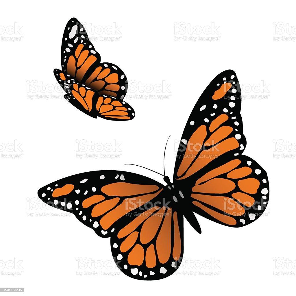 Monarch Butterfly vector art illustration