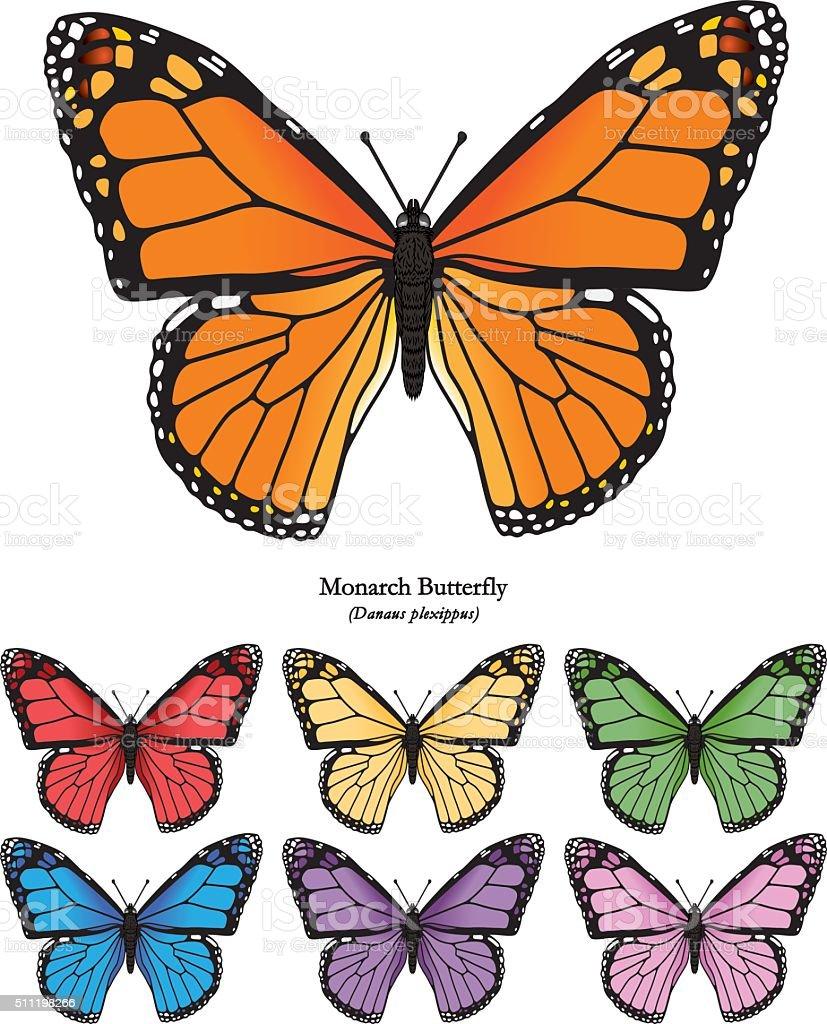 Monarch Butterfly Vector Illustration vector art illustration