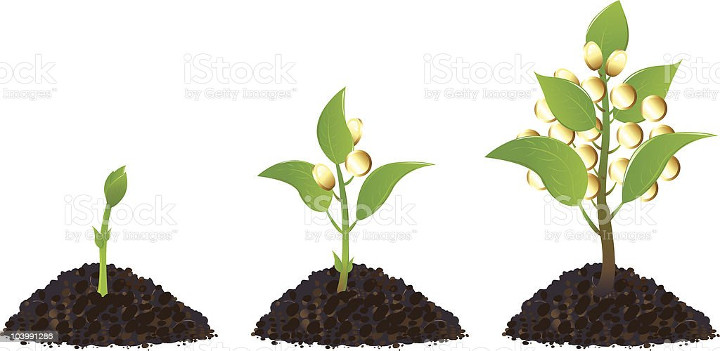Money plants life process royalty-free stock vector art