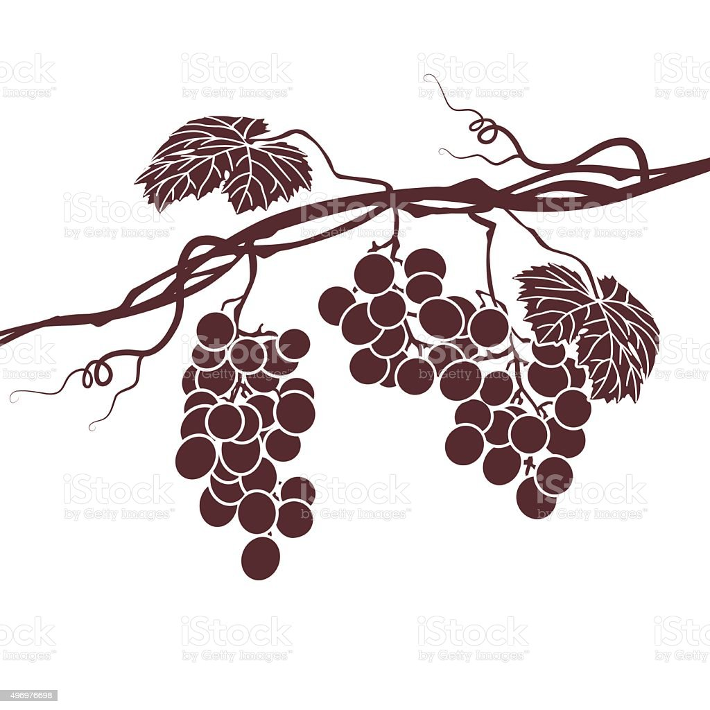 Monochrome illustration of the vine on a white background vector art illustration