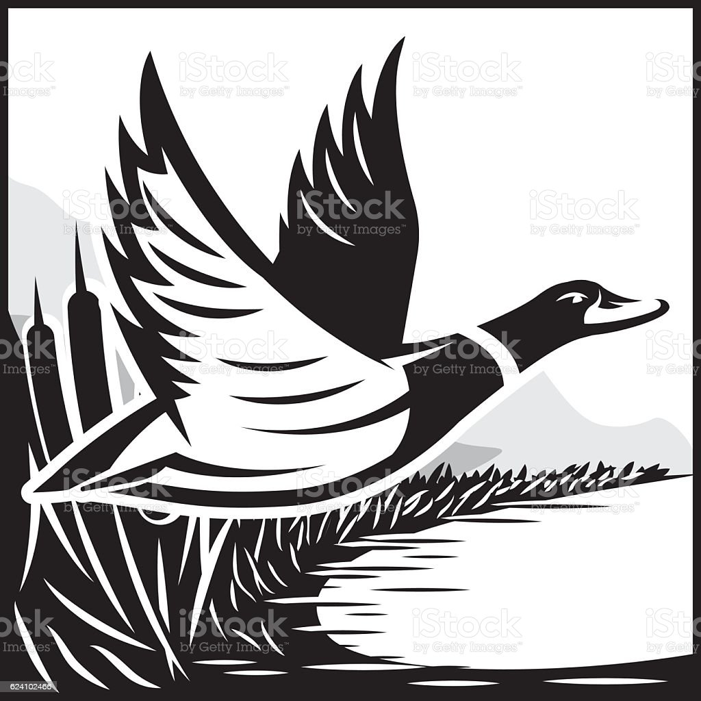 Monochrome illustration with flying wild duck over the water vector art illustration