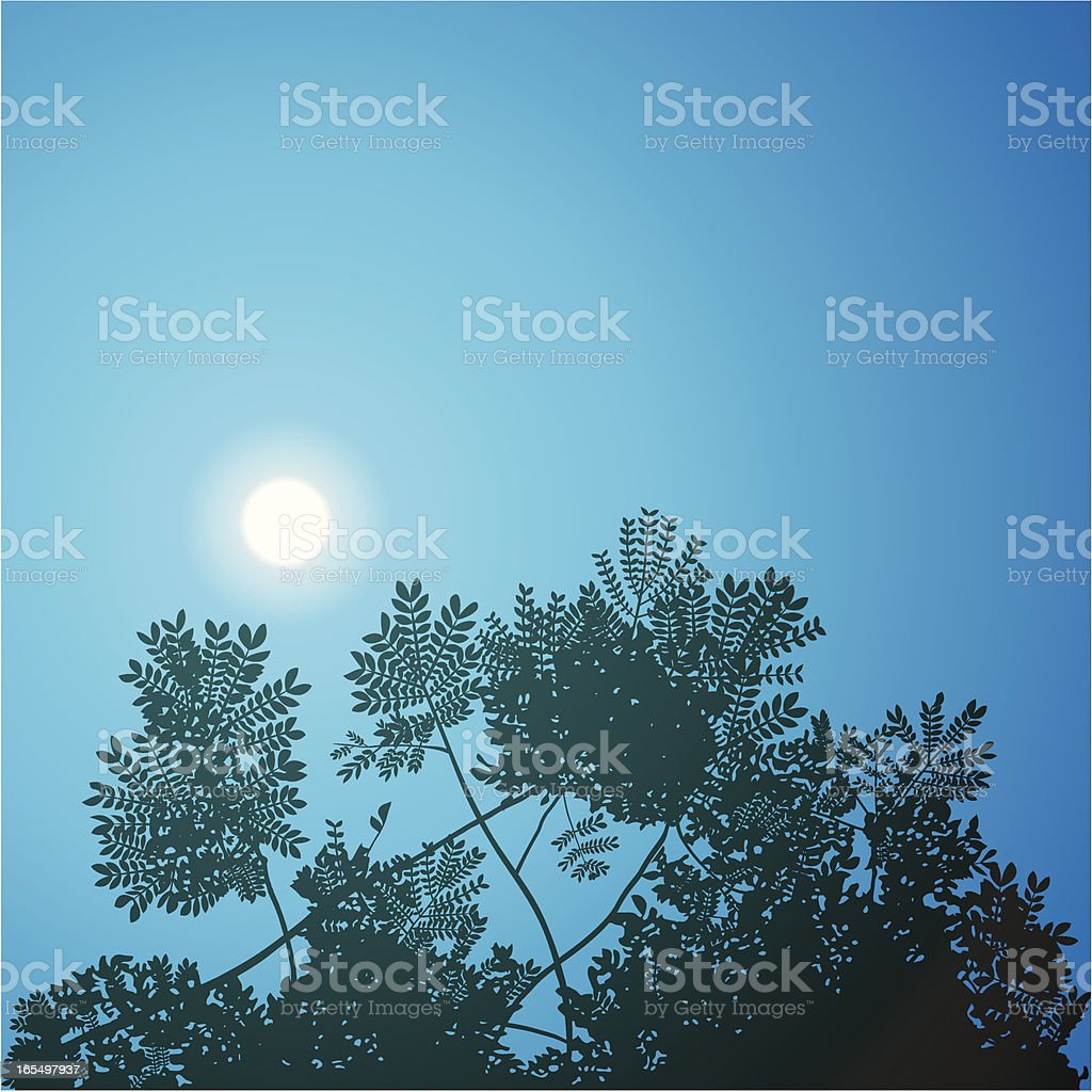 Moonlit Canopy vector art illustration