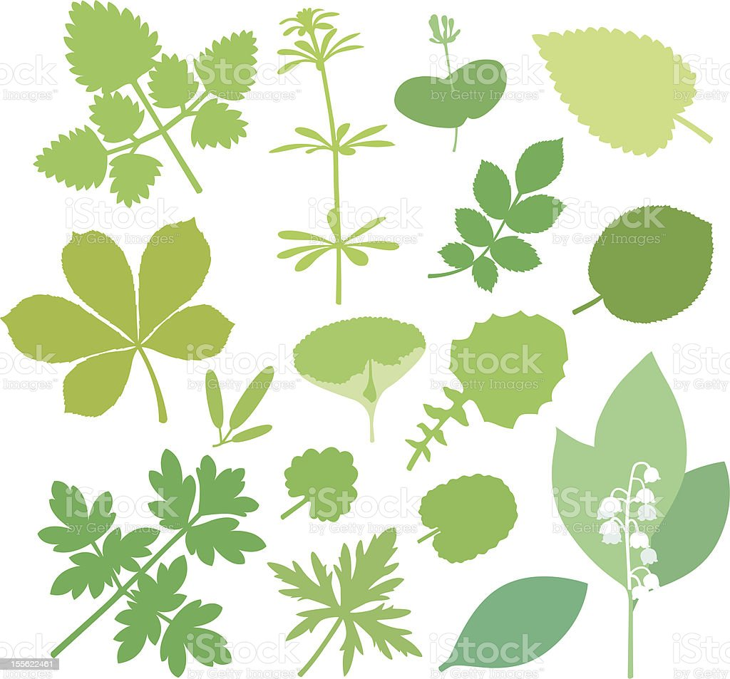 more green Leafs ( XIII ). vector art illustration