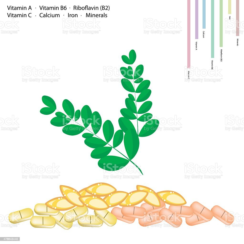 Moringa Leaves with Vitamin A, B6, B2 and C vector art illustration