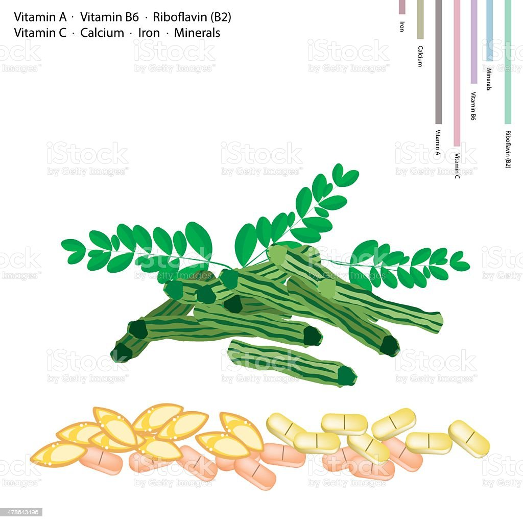 Moringa Pods with Vitamin A, B6, B2 and C vector art illustration