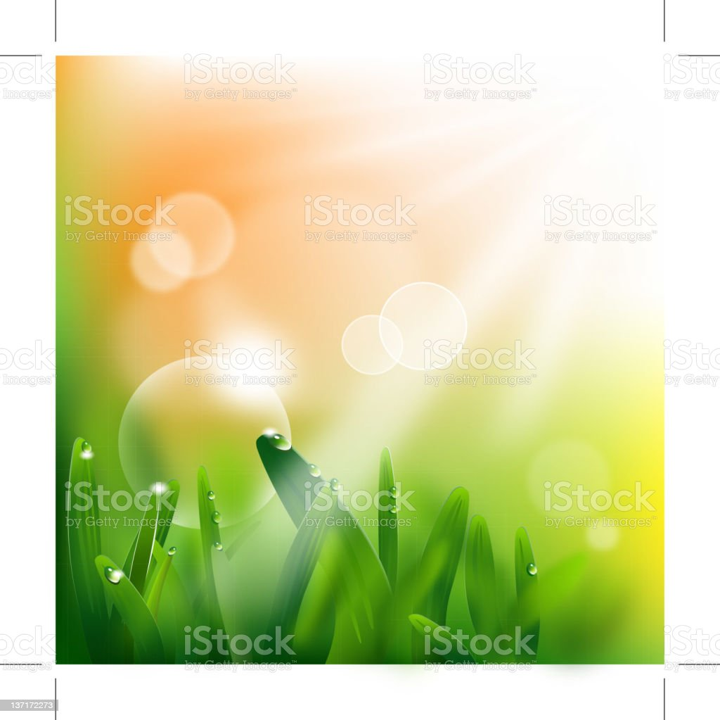 Morning dew on blades of grass royalty-free stock vector art