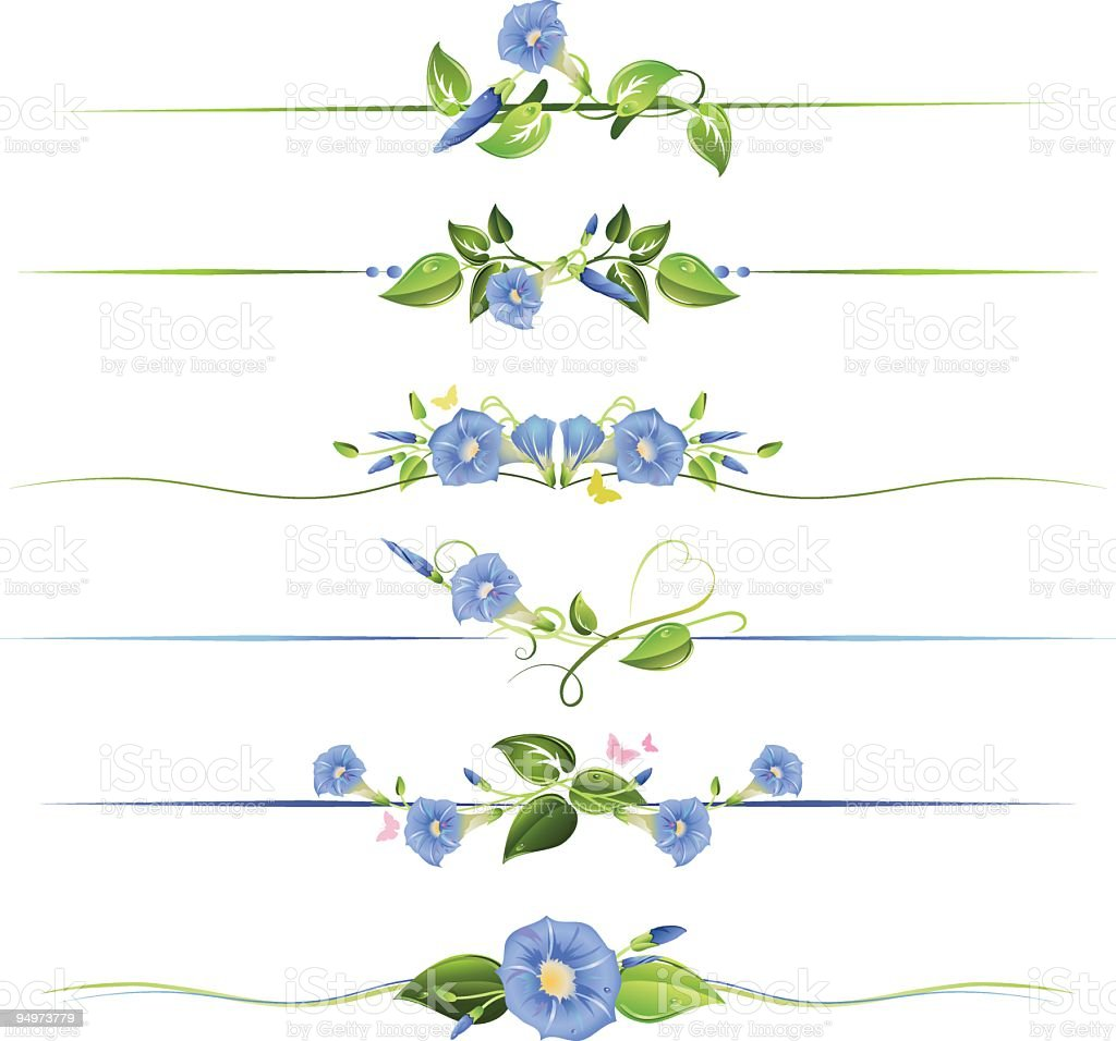 morning glory flowers and vines floral dividers