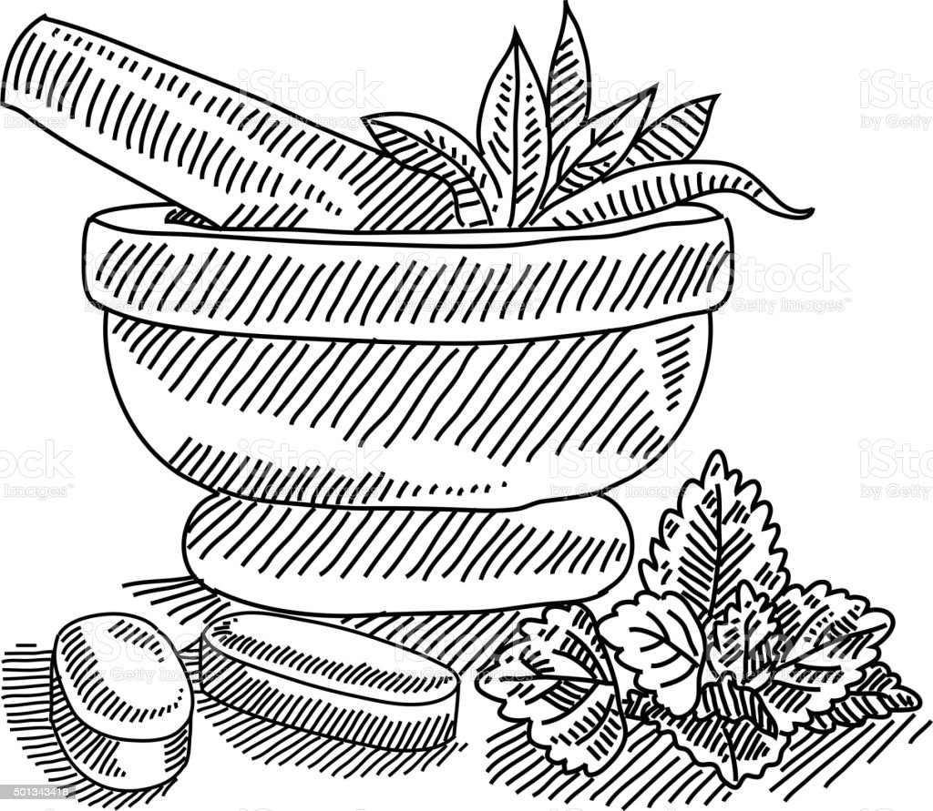 Mortar with herbal medicine drawing vector art illustration