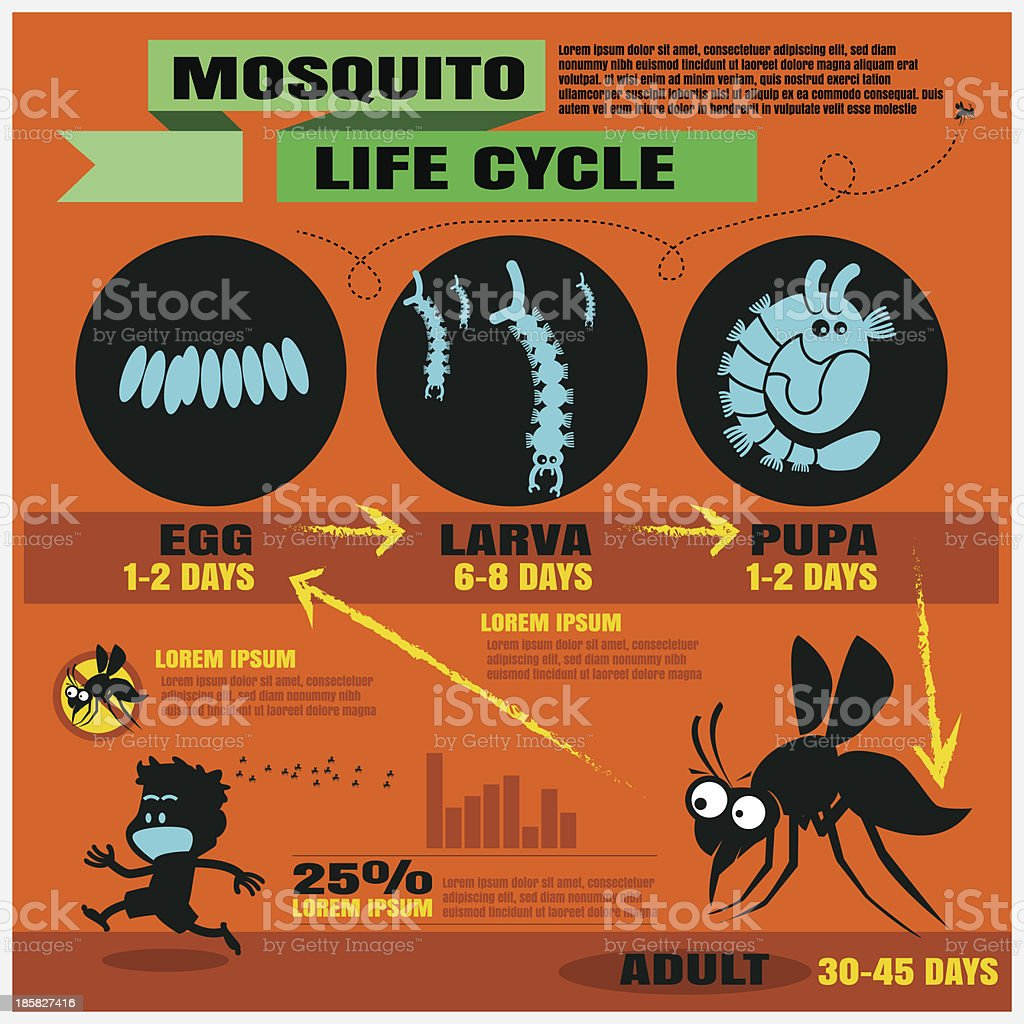 mosquito's life cycle vector background royalty-free stock vector art