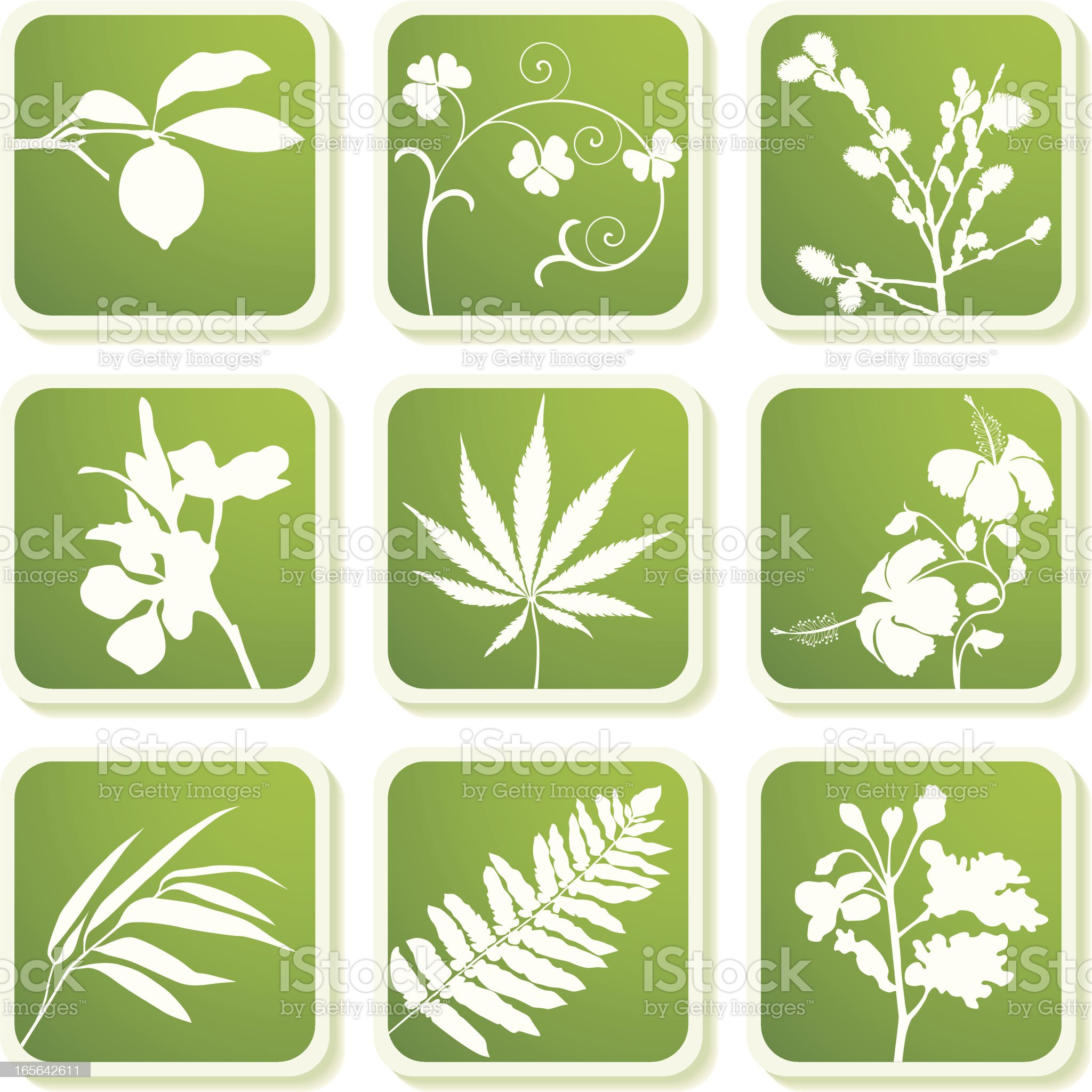 Most popular plants and leaves. royalty-free stock vector art