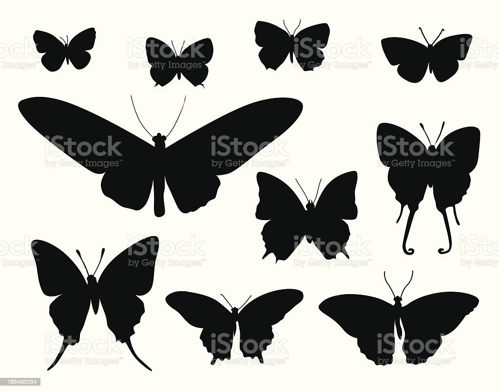 Moth Collection Vector Silhouette vector art illustration