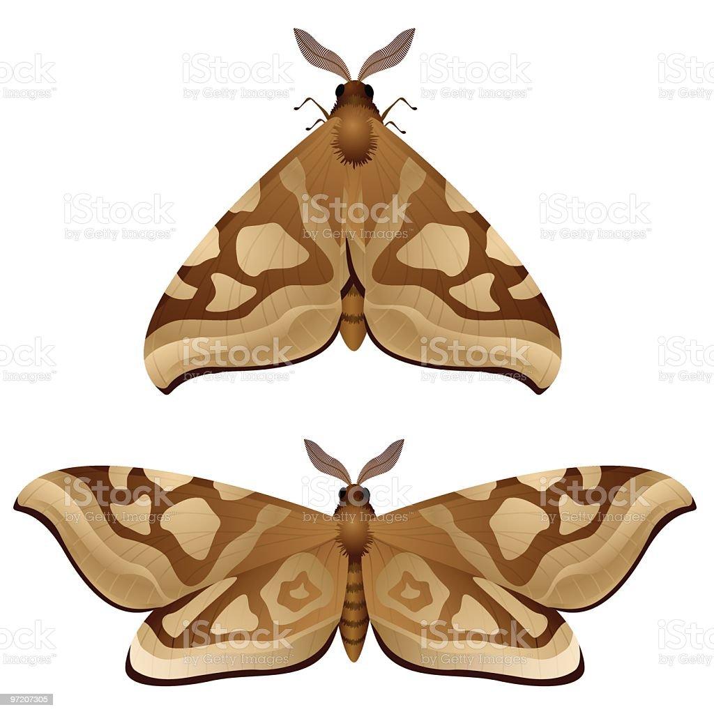 Moth vector art illustration