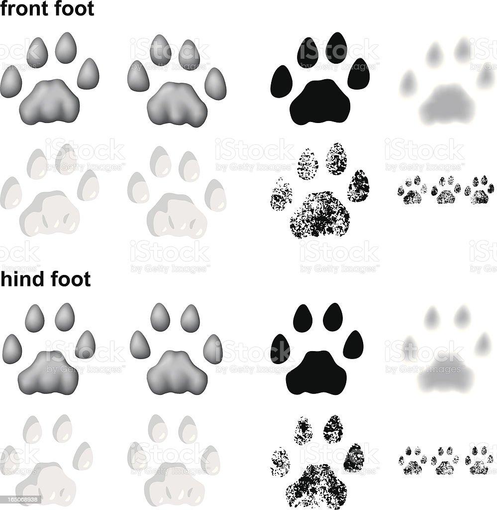 Mountain lion footprints vector art illustration