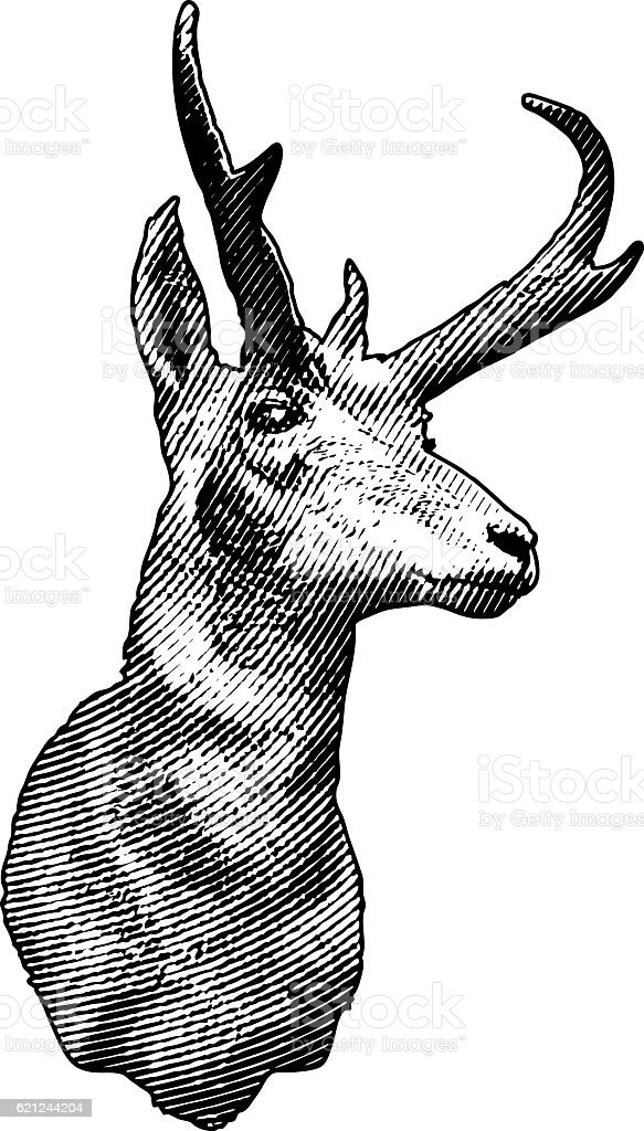 Mounted Pronghorn Antelope Head vector art illustration
