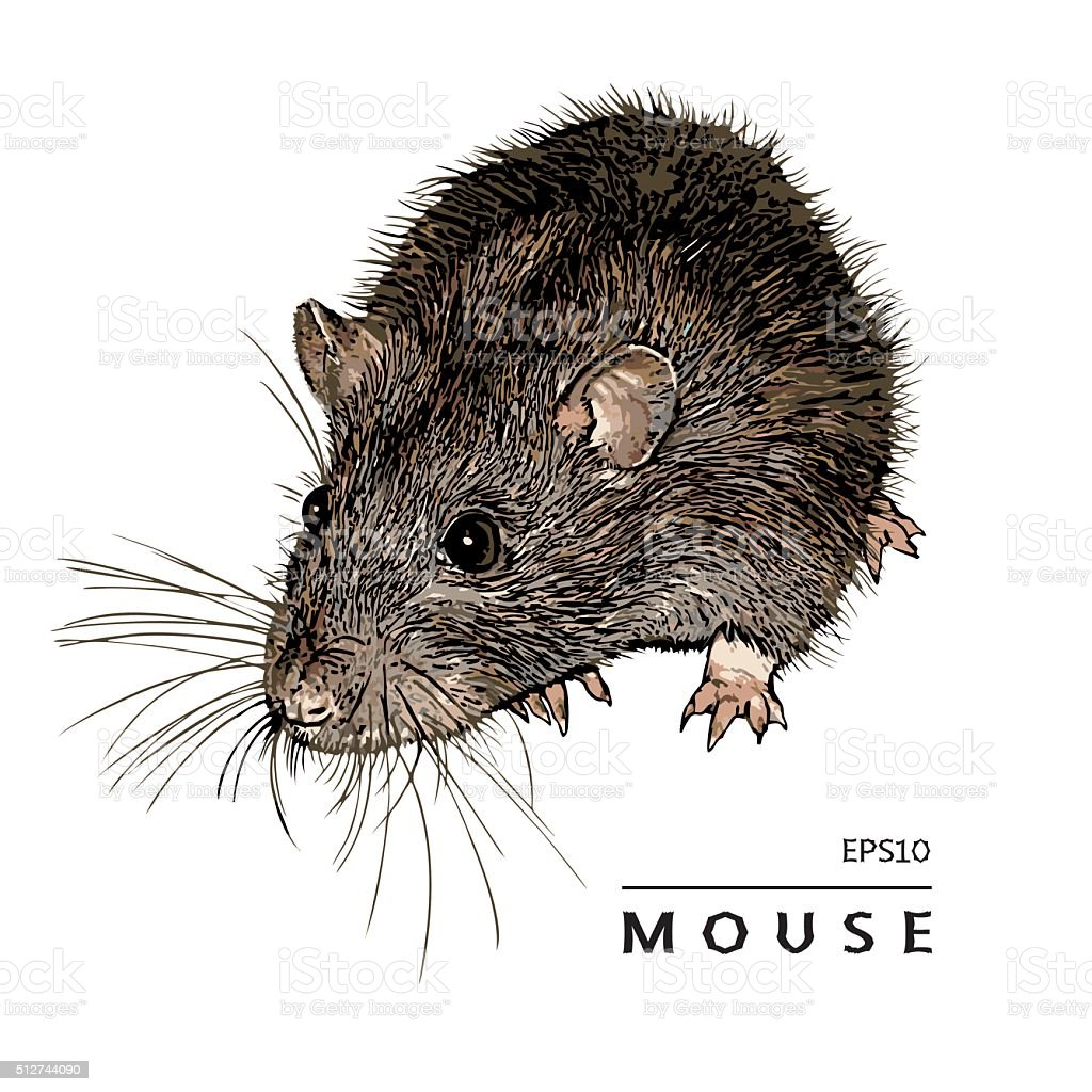 Mouse, Rat. Isolated Image. vector art illustration