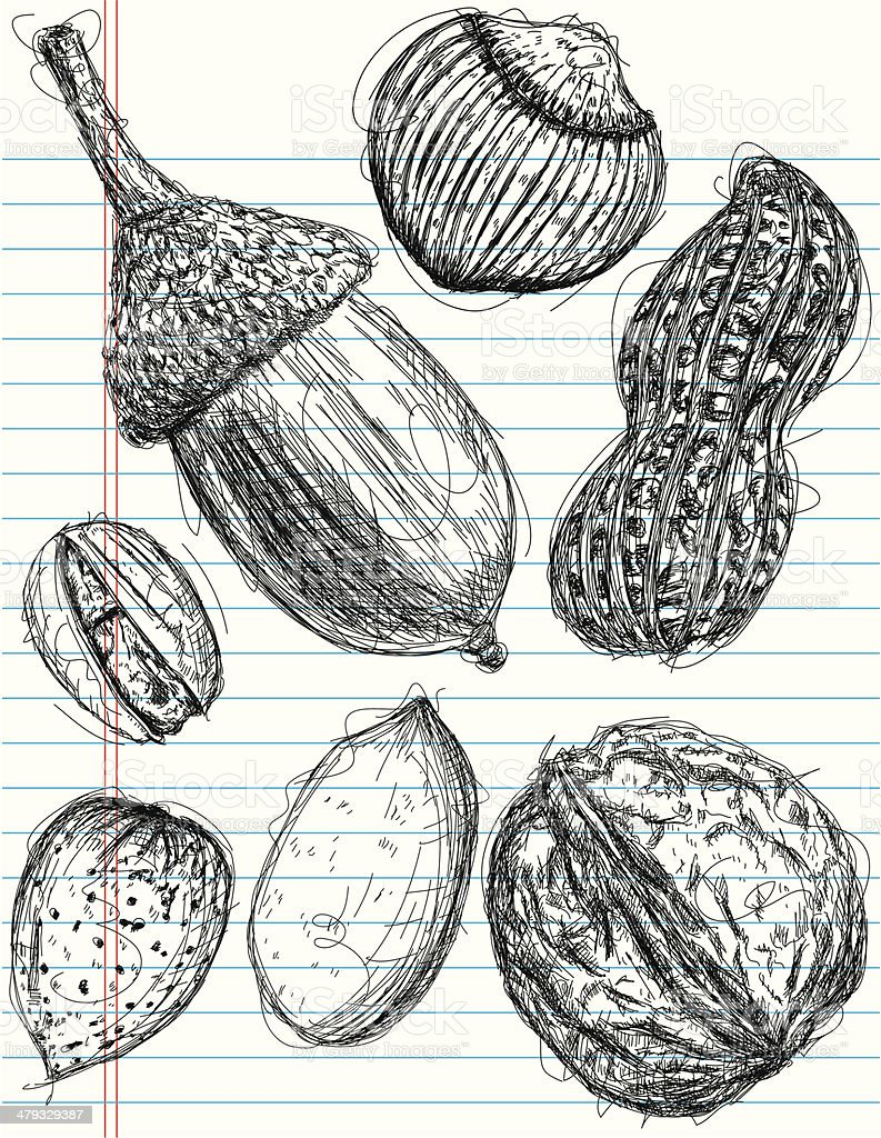 multiple nut sketches royalty-free stock vector art