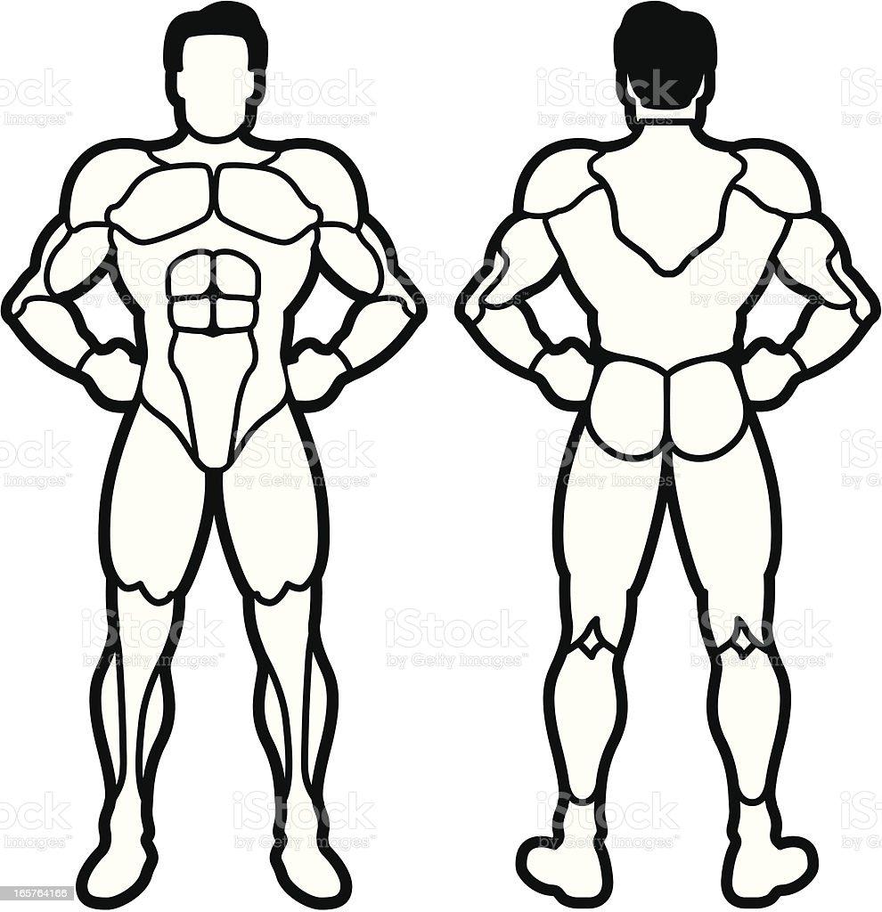 Muscle Chart vector art illustration
