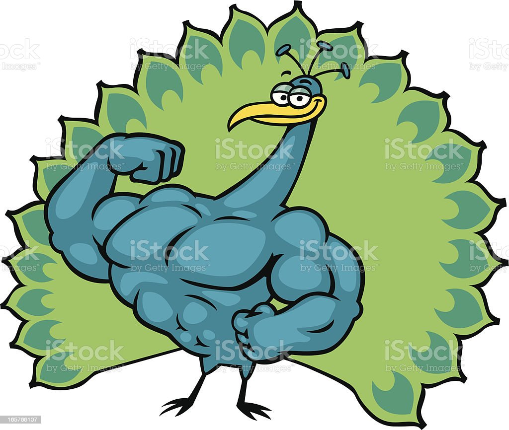 muscular peacock royalty-free stock vector art