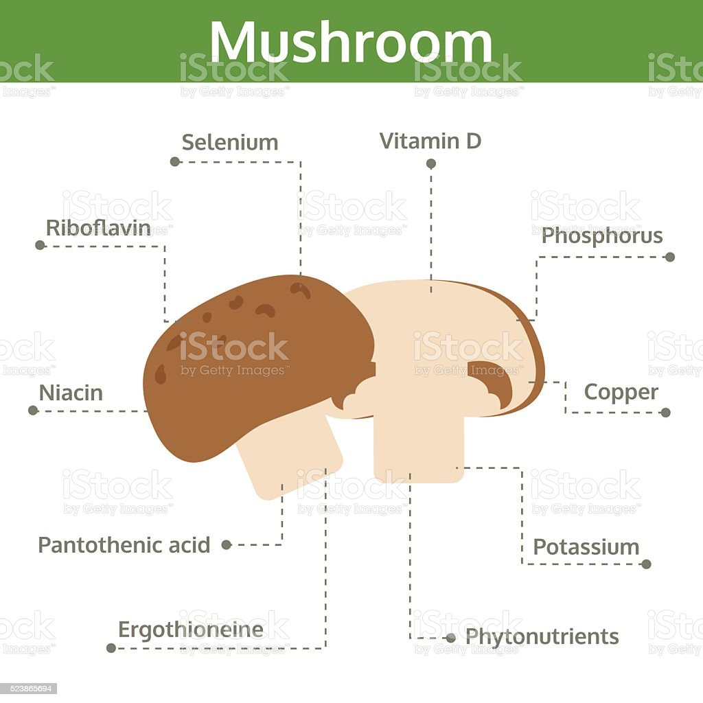 mushroom nutrient of facts and health benefits, info graphic vegetable vector art illustration