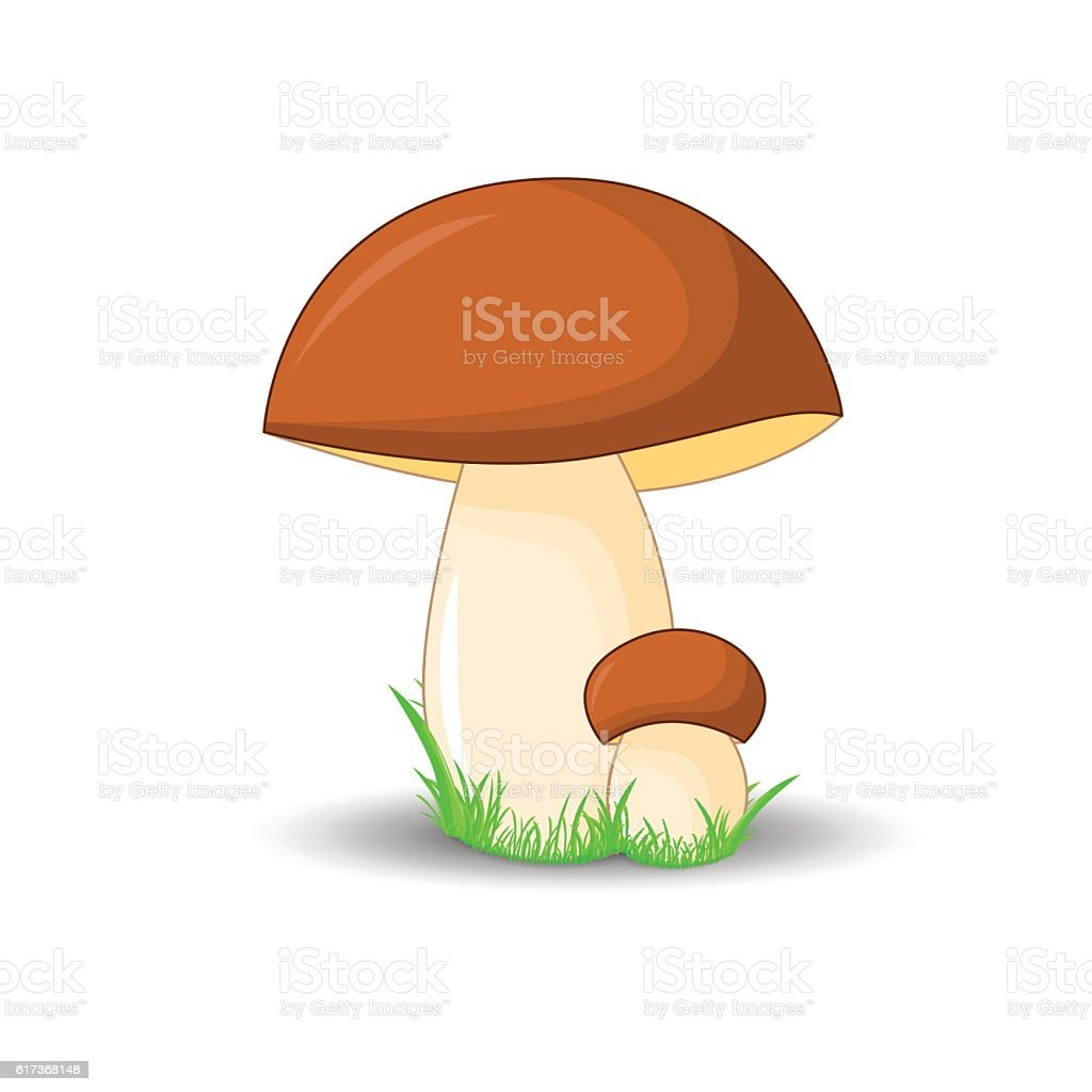 mushroom porcini surround isolated on white background with grass vector art illustration