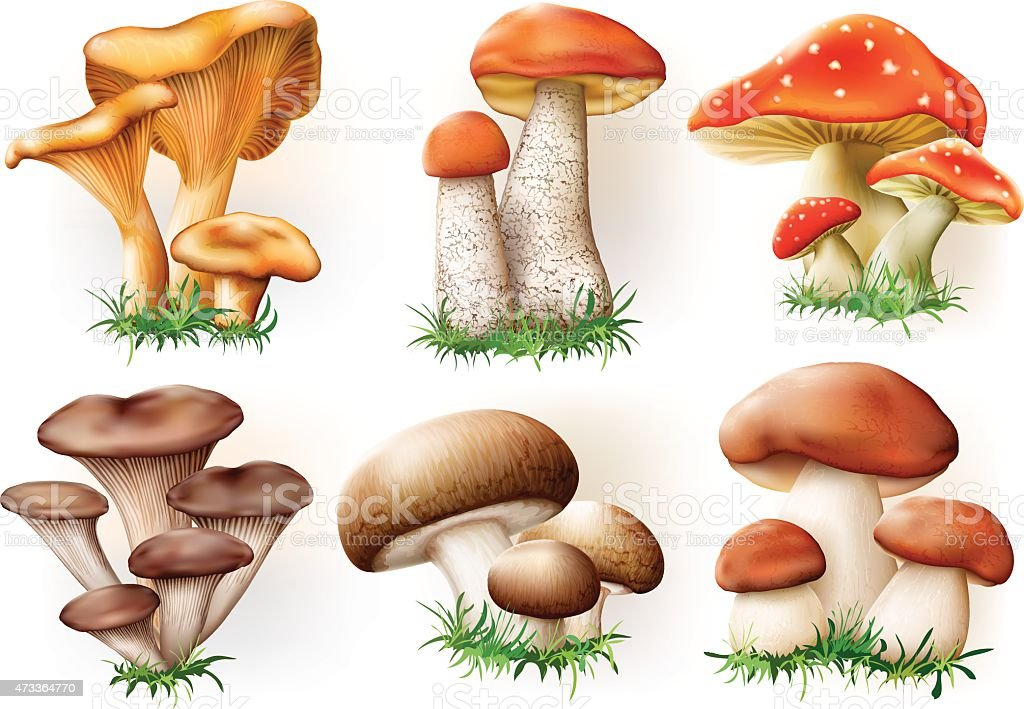 mushrooms collection vector art illustration