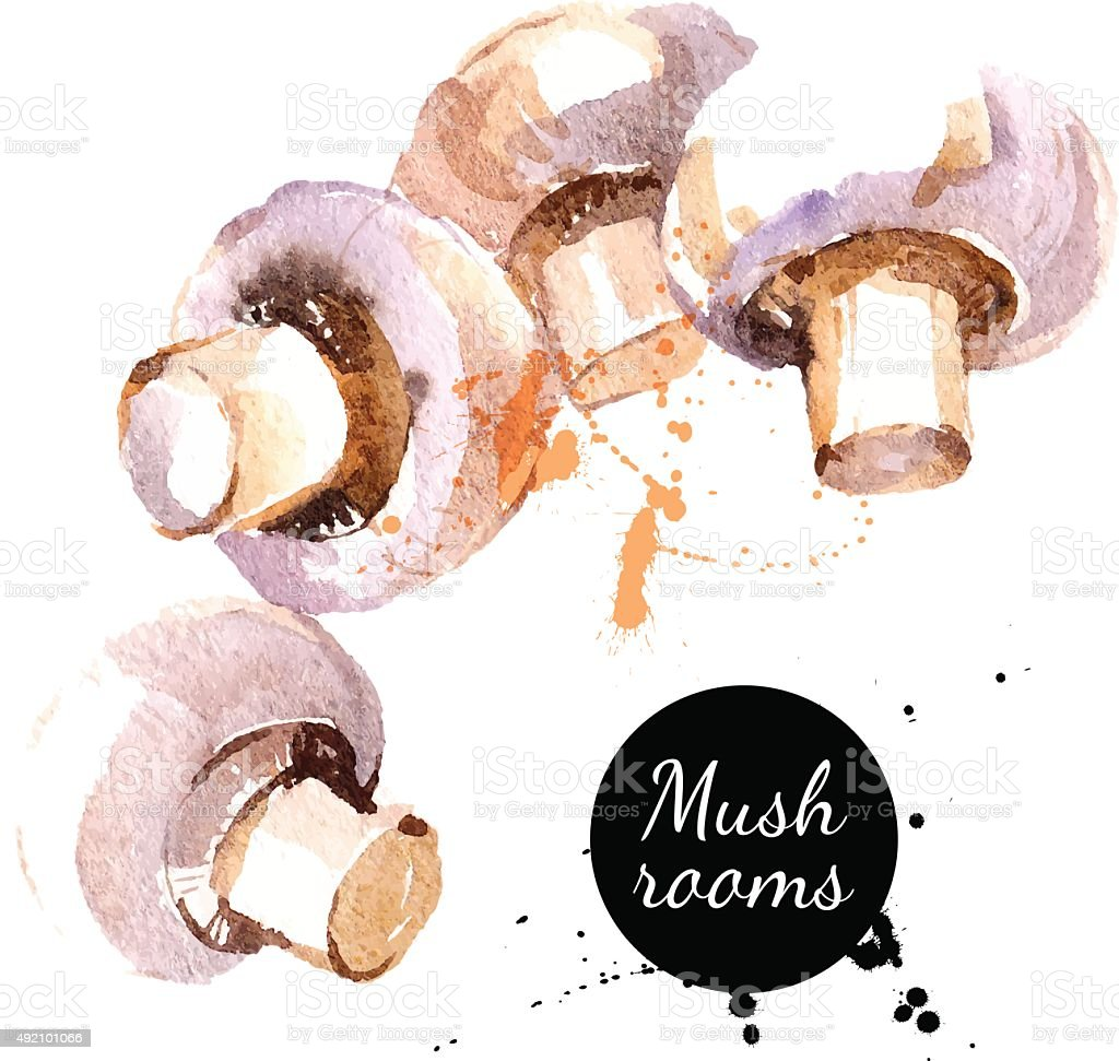 Mushrooms. Hand drawn watercolor painting on white background. V vector art illustration